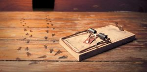 Comment choisir un piège à souris