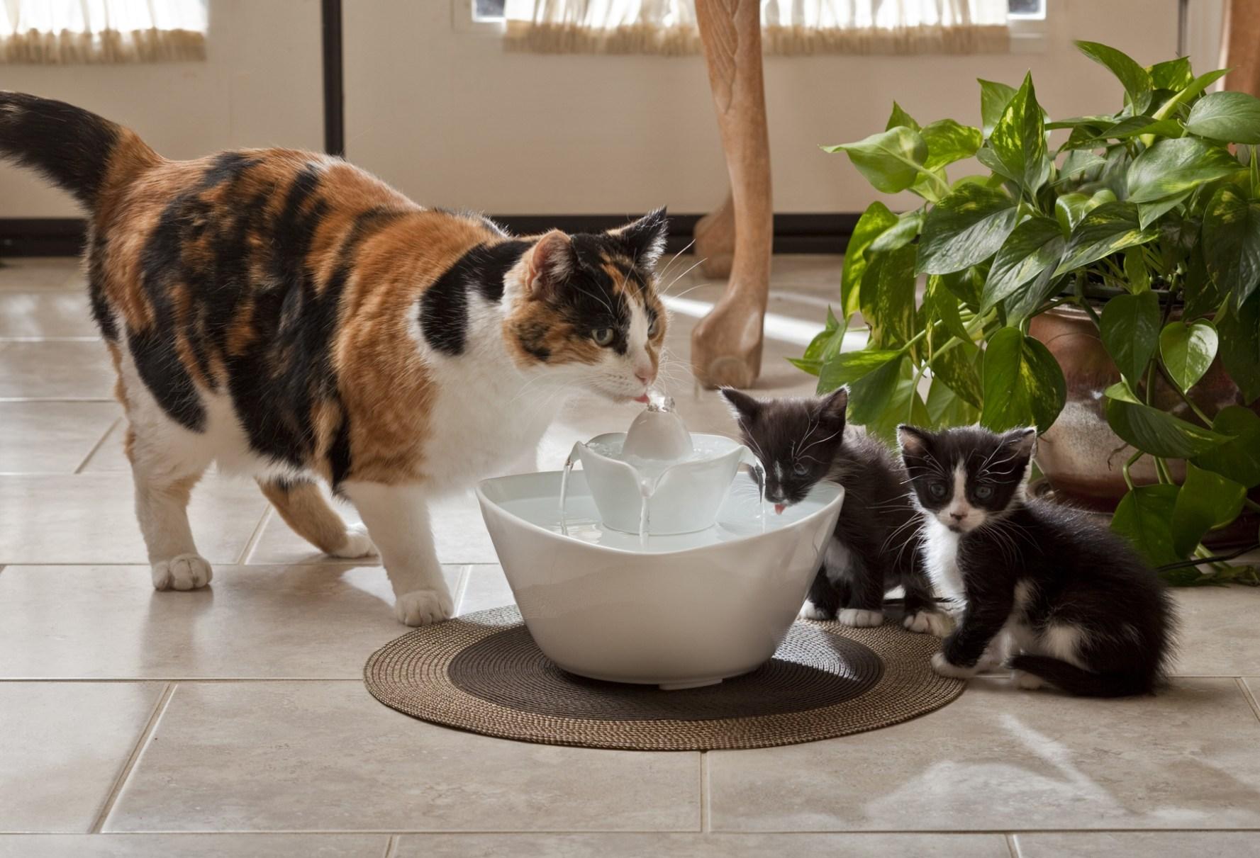 Comment utiliser une Fontaine à eau pour chat