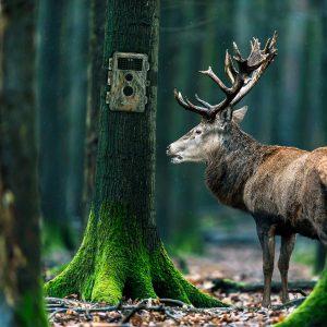 Comment choisir une caméra de chasse ?